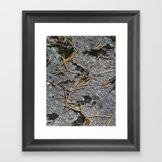 fir needle on a rock Texture Framed Art Print