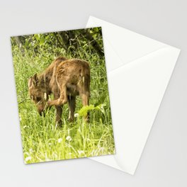 Itchy Nose or Smelly Feet? Stationery Cards