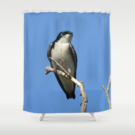 Male Tree Swallow Shower Curtain