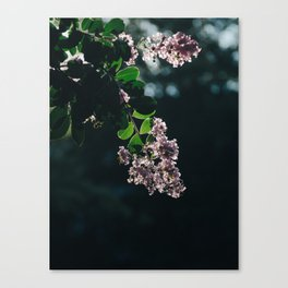 Sun Dazed Canvas Print