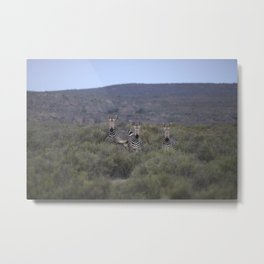 Cederberg Mountains I Metal Print