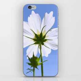 White Cosmos Flower iPhone Skin