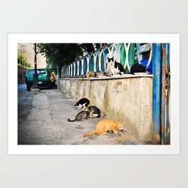 Bella Notte for Cats Art Print