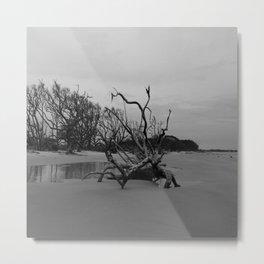 Ghost Trees - Driftwood Beach Metal Print