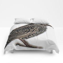 Norfolk sparrow Comforters