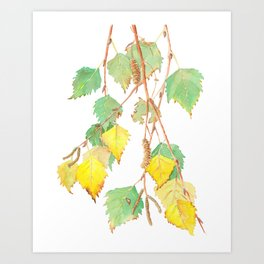 Autumn birch tree branch watercolour Art Print
