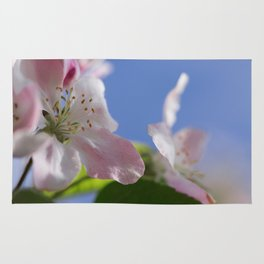 Apple Tree Blossoms InThe Blue Sky Rug
