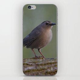 Gray Catbird near Sunrise iPhone Skin