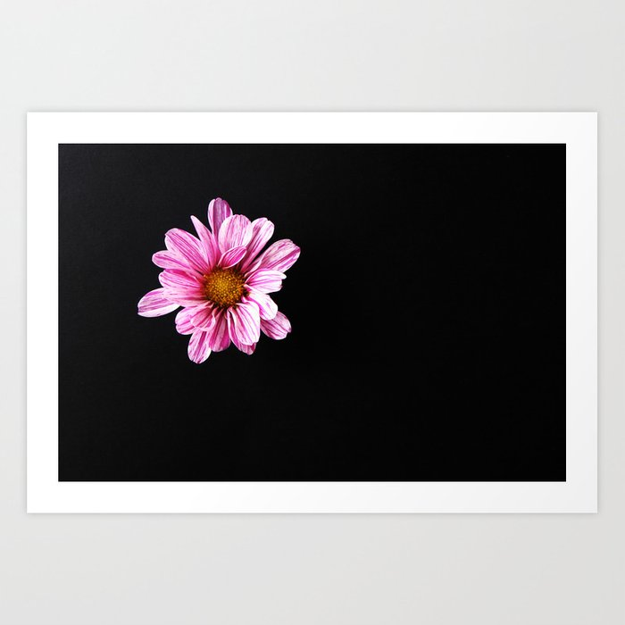 Chrysanthemum Flower Art Print