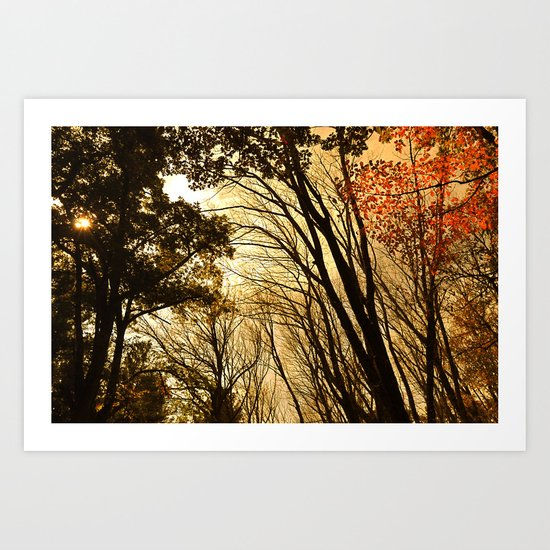 Autumn Boughs Art Print