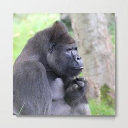 Gorilla 519-2 Metal Print