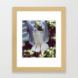 Peggy Gull Framed Art Print