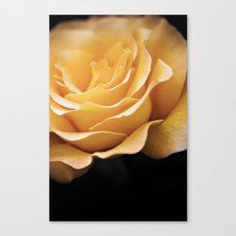Lady Rowena- Golden Rose  Canvas Print