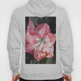 Pink Amaryllis Watercolor Botanical Garden Flower Painting Nature Art Hoody
