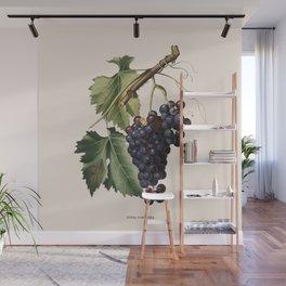 Black Grape Antique Botanical Illustration Wall Mural