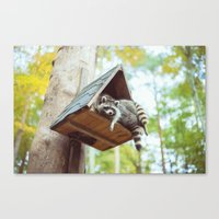 racoon Canvas Prints featuring racoon by Kalbsroulade