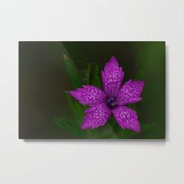 Purple morning Bloom Metal Print
