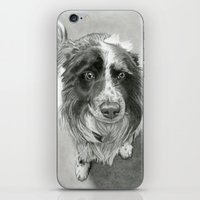 border collie iPhone & iPod Skins featuring Border Collie by Sarahphim Art