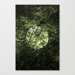 Reflections, Four Canvas Print