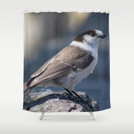 Curious Gray Jay Shower Curtain