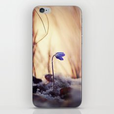 When evening comes iPhone & iPod Skin