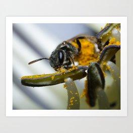 Sweat Bee on Hosta Art Print