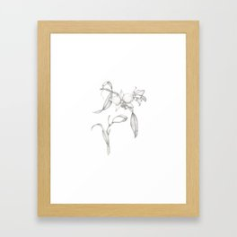 An Orchid with Charisma Framed Art Print