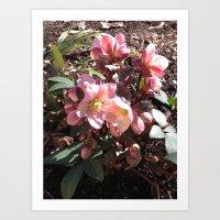 Lenten Roses Blooming in Early Spring Art Print