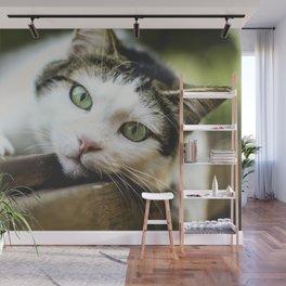 Cat by Nicolas Picard Wall Mural