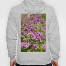 Phlox subulata pink flowering Hoody