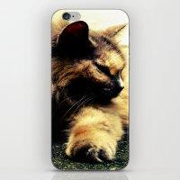 hemingway iPhone & iPod Skins featuring Hemingway Cat by Derek Fleener