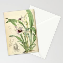 Cochleanthes discolor Orchid 1855 Stationery Cards