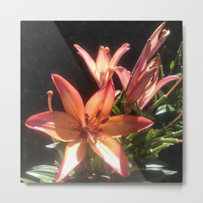 Sunny orange lily Metal Print