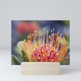 Tropical Sunburst - Leucospermum Pincushion Protea Flower Mini Art Print