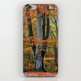 The Beauty of Fall iPhone Skin
