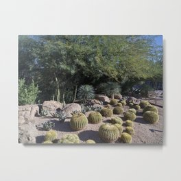 Cacti at the Desert Botanical Garden a 147-acre botanical preserve in Phoenix Arizona Founded by the Metal Print