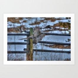 Dive, Dive, Dive! - Great Grey Owl Hunting Art Print