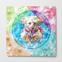 Penny the Yorkipoo rainbow colors Metal Print