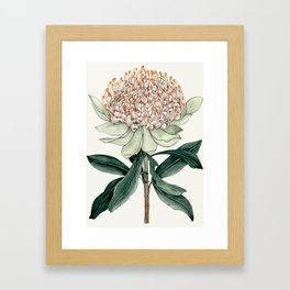 Waratah Botanical Framed Art Print