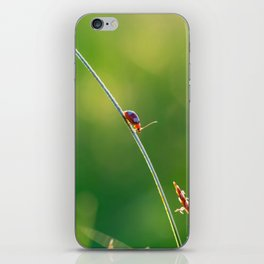 Little red bug perching on grass iPhone Skin