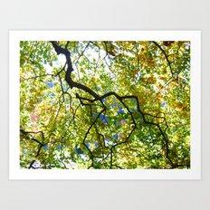 Arboretum Tree Art Print
