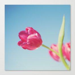 . Sun Kissed Tulip .  Canvas Print