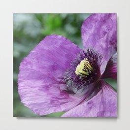Purple Poppy / Violet Metal Print