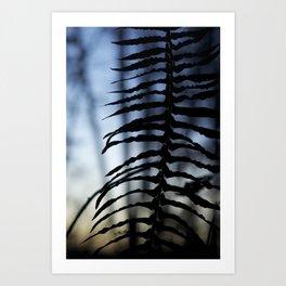 Fern at Dusk Art Print