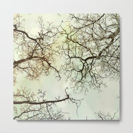 Winter tree branches in the sky Metal Print