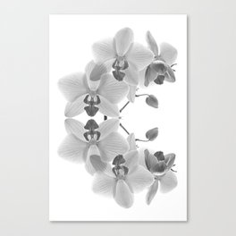 Mono Orchids Canvas Print