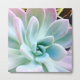 Soft Succulent Metal Print