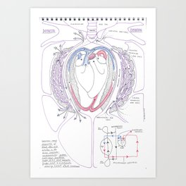 Avian Respiratory System with Heart, Colour Art Print