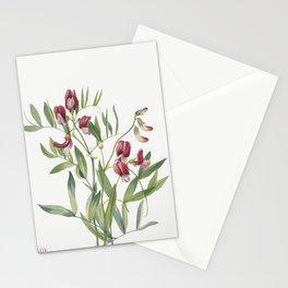Wild Pea (Lathyrus decaphyllus) (1938) by Mary Vaux Walcott Stationery Cards