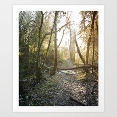 Lumière de Solstice II Art Print